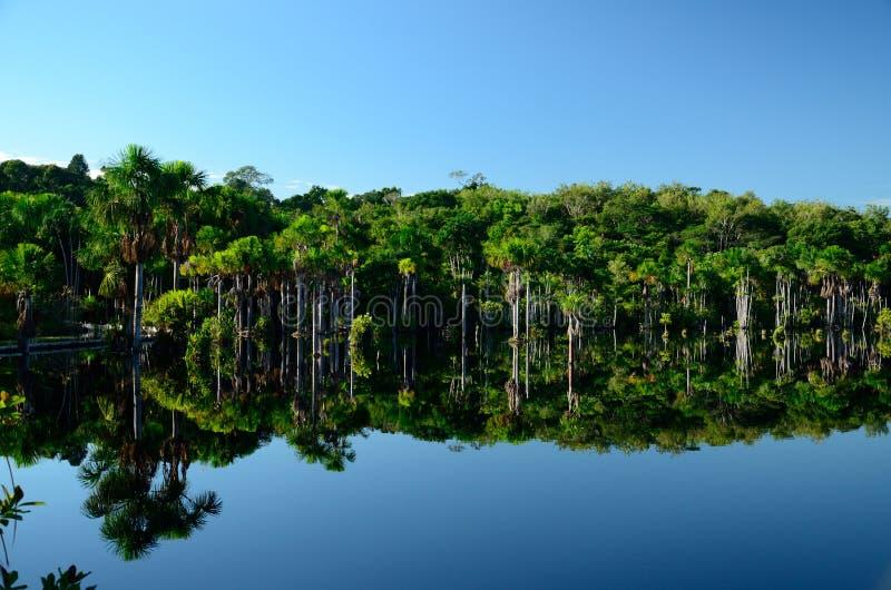 Lago amazon foto de archivo libre de regalías