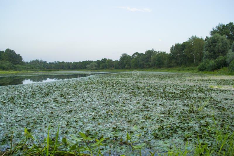 Lago antes da noite imagem de stock