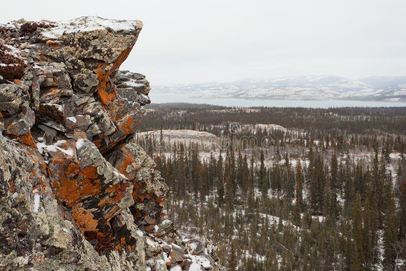 Lago arancio Laberge il Yukon Canada di taiga della roccia del lichene fotografia stock libera da diritti