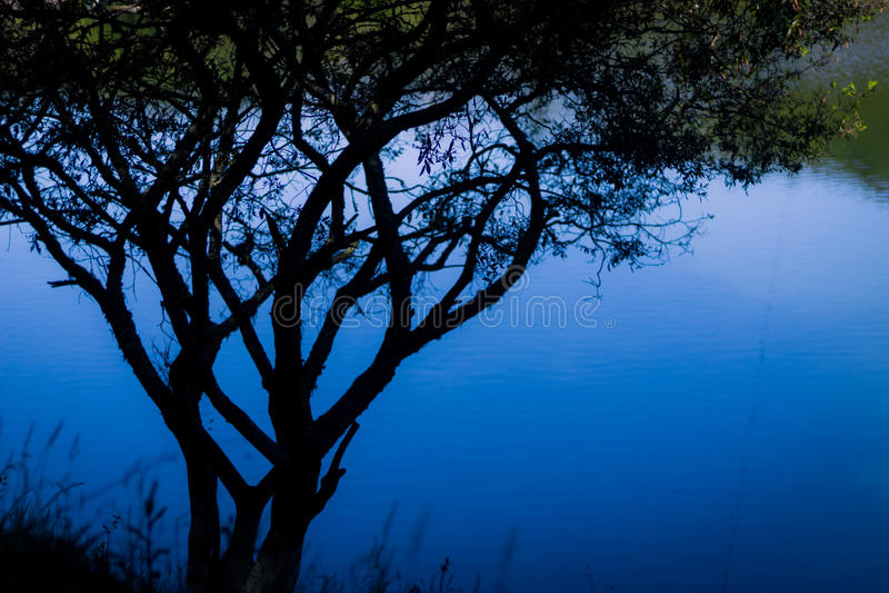 Lago attraverso le ombre 2 fotografia stock libera da diritti