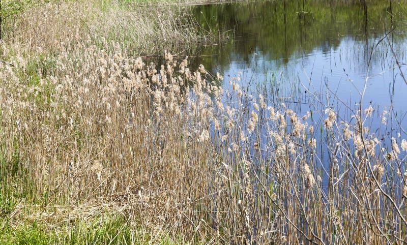 Lago autumn foto de archivo