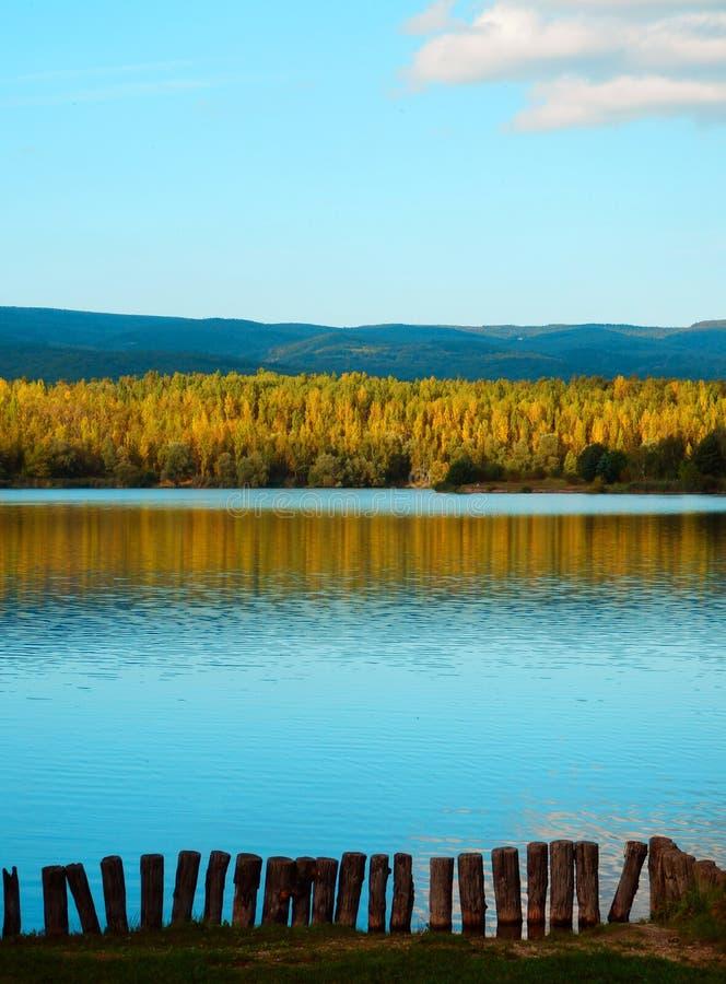 Lago autumn e floresta das árvores de vidoeiro fotos de stock royalty free