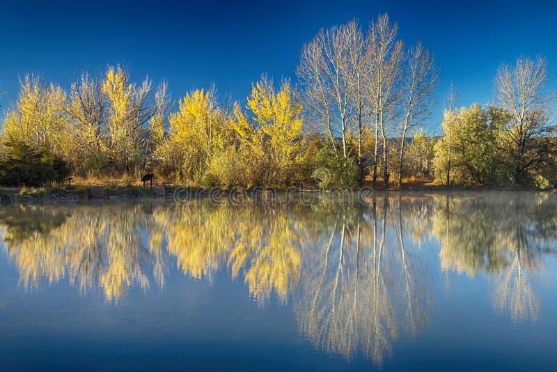 Lago Autumn Reflections coot fotografia stock libera da diritti