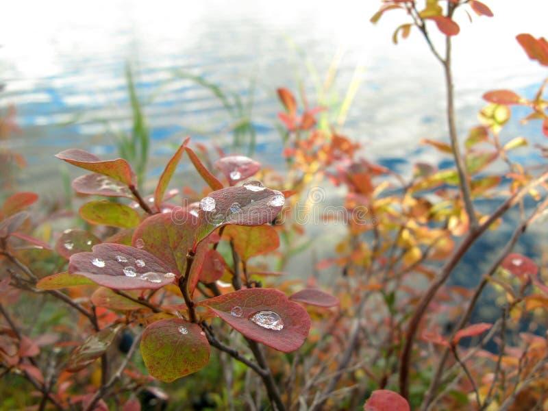 Lago in autunno della Carelia, settembre fotografie stock libere da diritti