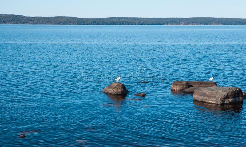 Lago azul calmo com pedras e pássaros neles imagem de stock