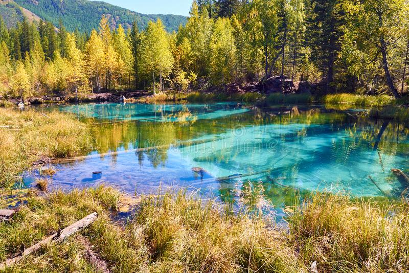 Lago azul do geyser cercado por florestas na montanha de Altai, Sibéria do outono, Rússia fotos de stock