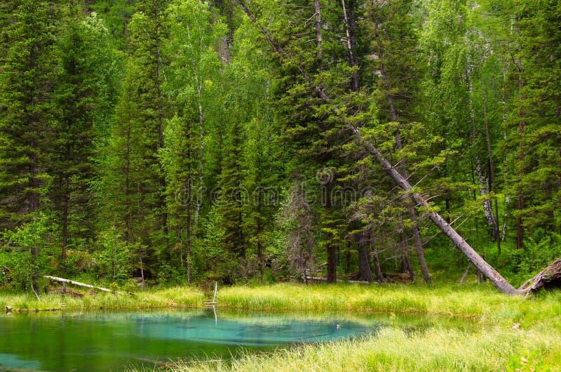 Lago azul do geyser em montanhas de Altay com a floresta verde bonita foto de stock royalty free
