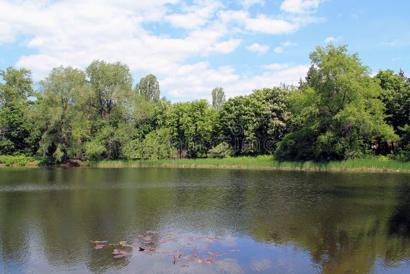 Lago azul na floresta com céu azul e as árvores verdes fotos de stock royalty free
