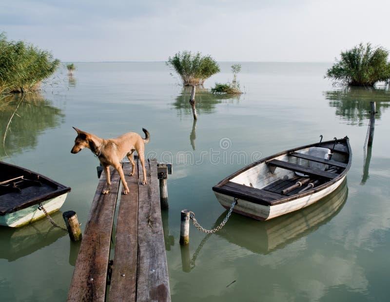 Lago Balaton (Szigliget) imágenes de archivo libres de regalías