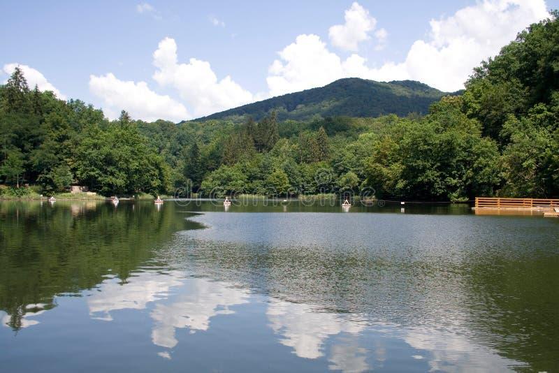 Lago bear na Transilvânia foto de stock royalty free