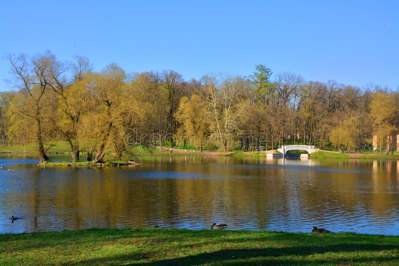 Lago Beloe nel giardino del palazzo Gatcina St Petersburg, Russia fotografie stock libere da diritti