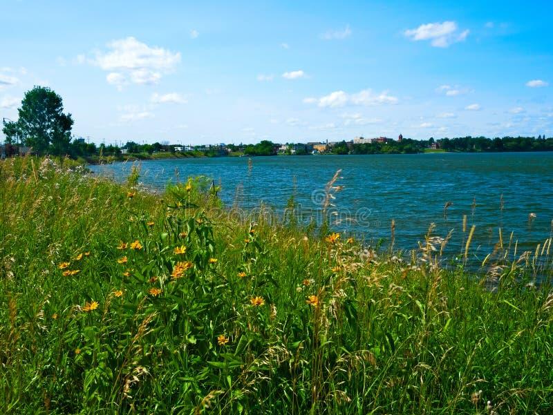 Lago Bemidji con las flores salvajes en la orilla del sur en Bemidji Minnesota fotografía de archivo libre de regalías