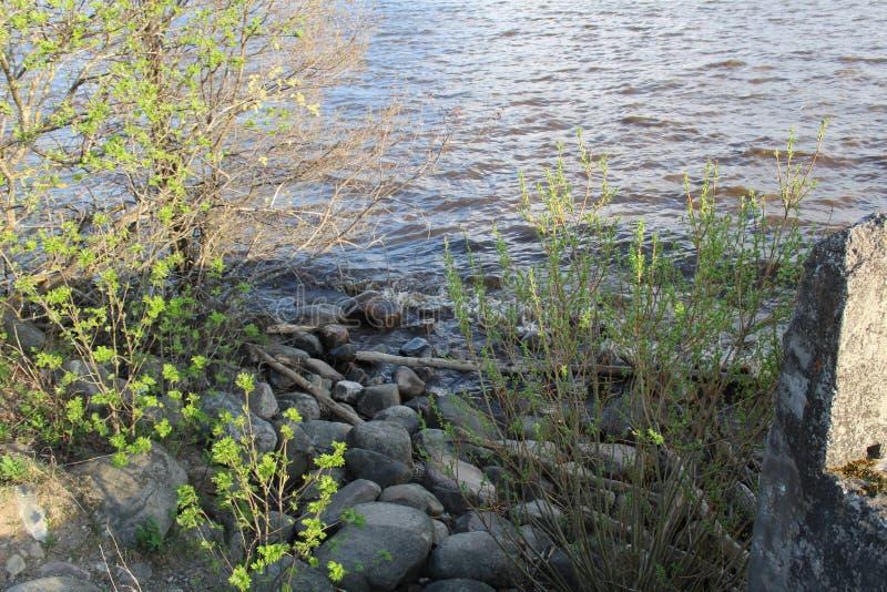 Lago bianco in primavera fotografia stock