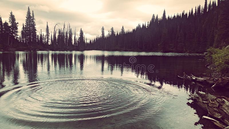 Lago birch immagine stock