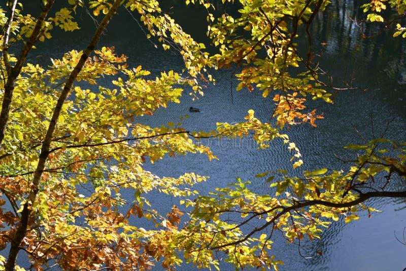 Lago blu fotografia stock libera da diritti