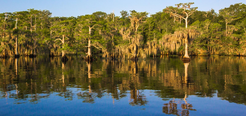 Lago blu cypress fotografie stock