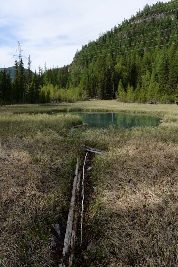 Lago blu Geysernoe, vicino al villaggio di Aktash, distretto di Ulagansky, Gorny Altai immagine stock libera da diritti