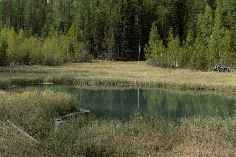 Lago blu Geysernoe, vicino al villaggio di Aktash, distretto di Ulagansky, Gorny Altai, Siberia immagini stock libere da diritti