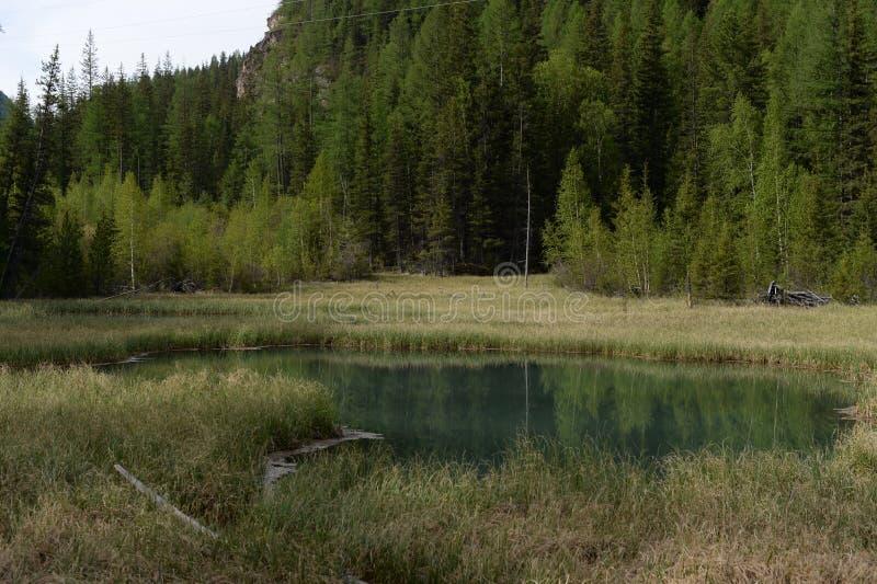 Lago blu Geysernoe, vicino al villaggio di Aktash, distretto di Ulagansky, Gorny Altai, Siberia immagine stock libera da diritti