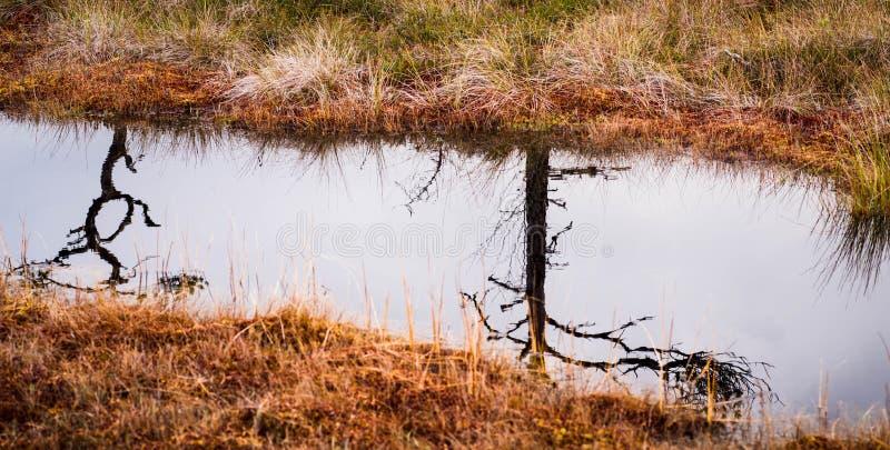 Lago bog in autunno fotografia stock