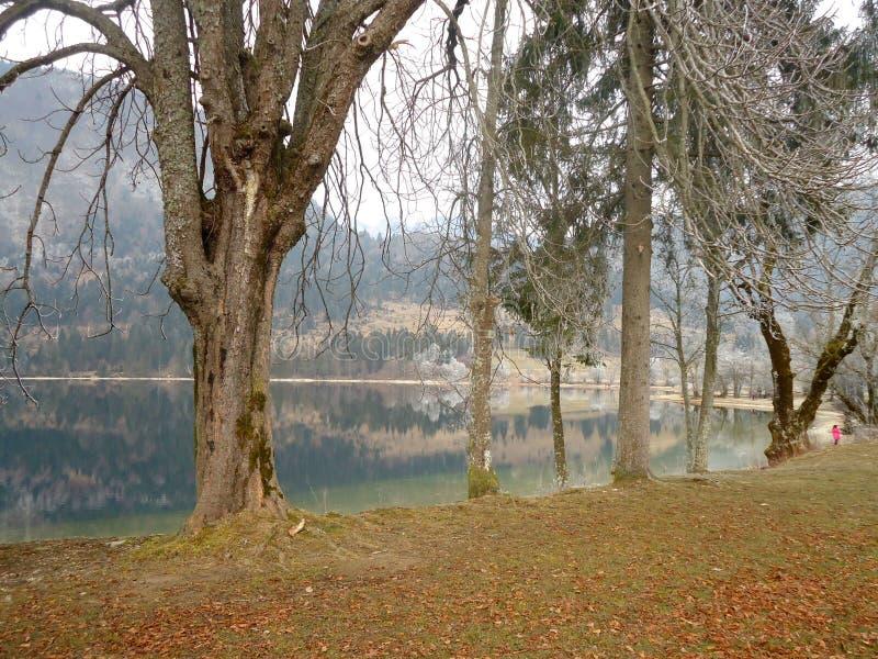 Lago Bohinj no Eslovênia no inverno com árvores fotos de stock