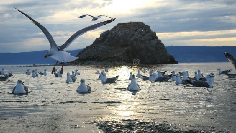 Lago bonito Baikal da montanha Por do sol sobre os picos de montanha e as gaivota graciosas de voo imagens de stock