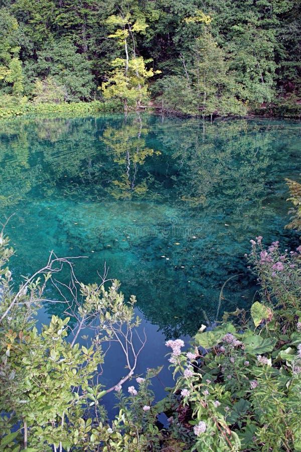 Lago bonito cercado por árvores em uma floresta imagens de stock royalty free