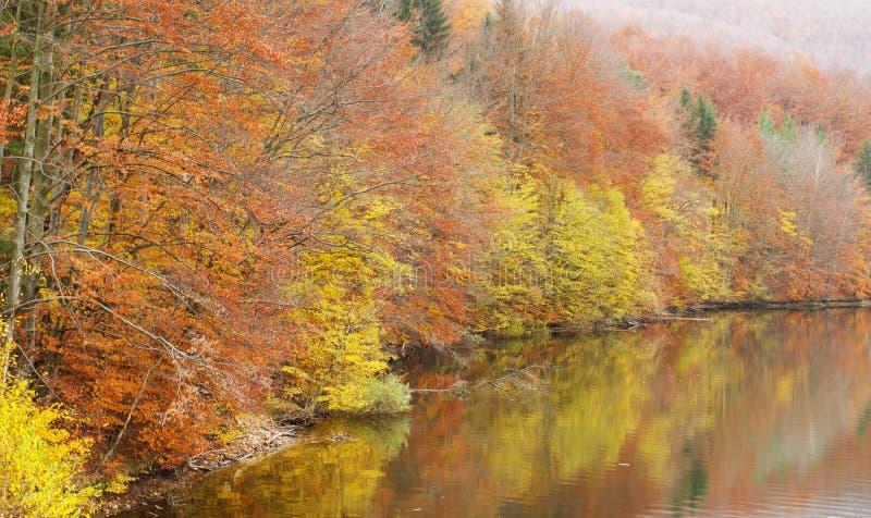 Lago bonito da floresta do outono fotografia de stock