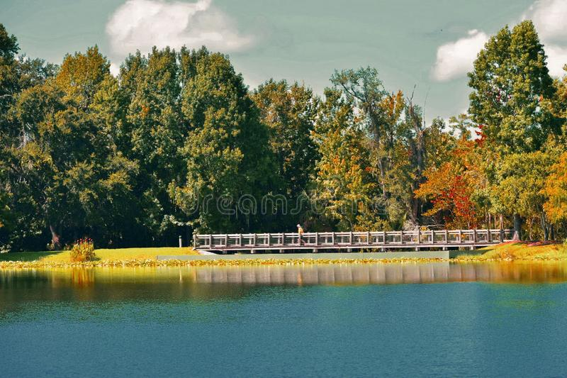 Lago bonito da floresta na manhã Homens que andam no corredor do lado do lago na celebração fotografia de stock