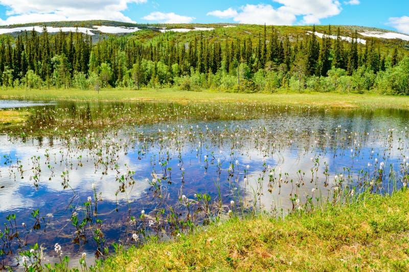 Lago bonito mountain imagens de stock