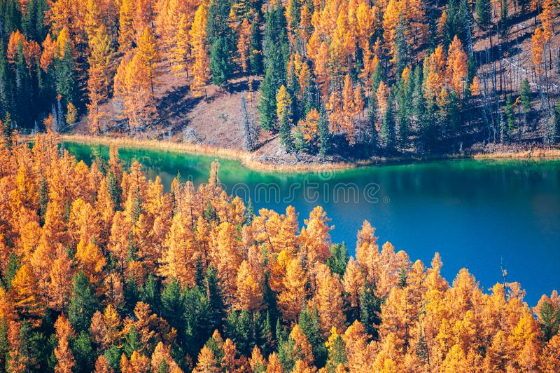 Lago bonito na floresta do outono, Altai, Sibéria, Rússia foto de stock