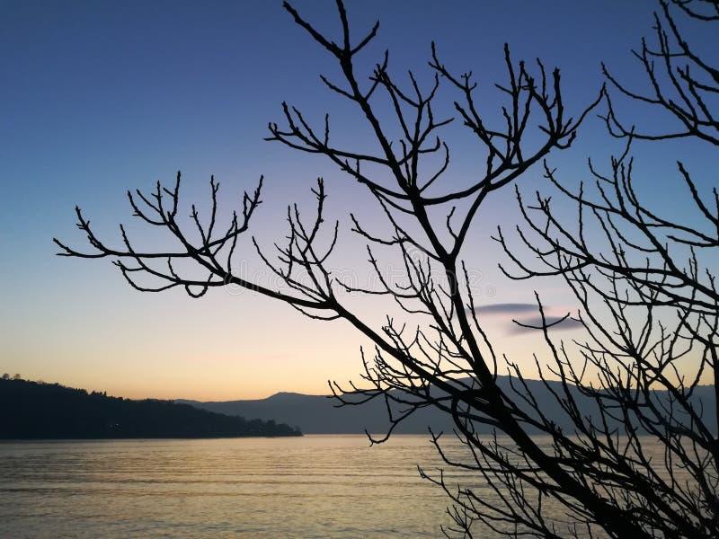Lago branch foto de archivo libre de regalías