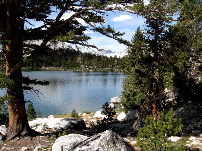 Lago bullfrog fotografía de archivo libre de regalías