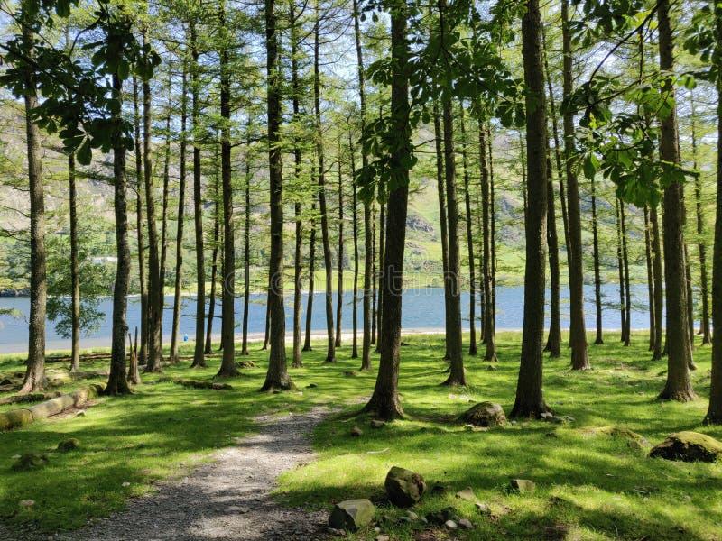 Lago Buttermere del árbol de pino fotos de archivo libres de regalías