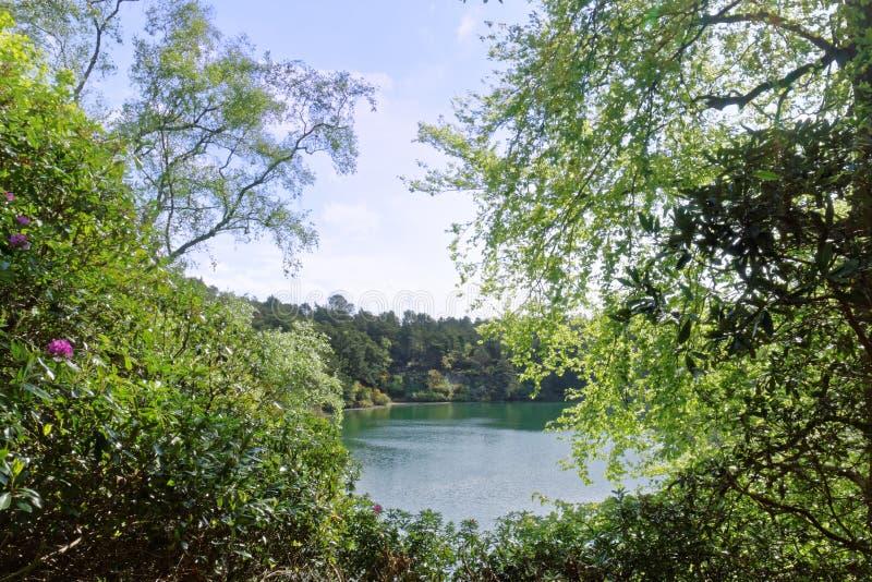 Lago cênico e florestas na associação azul, Dorset, Inglaterra imagens de stock royalty free