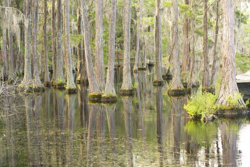 Lago calmo Marsh Cypress Trees Deep South Georgia U.S.A. fotografia stock