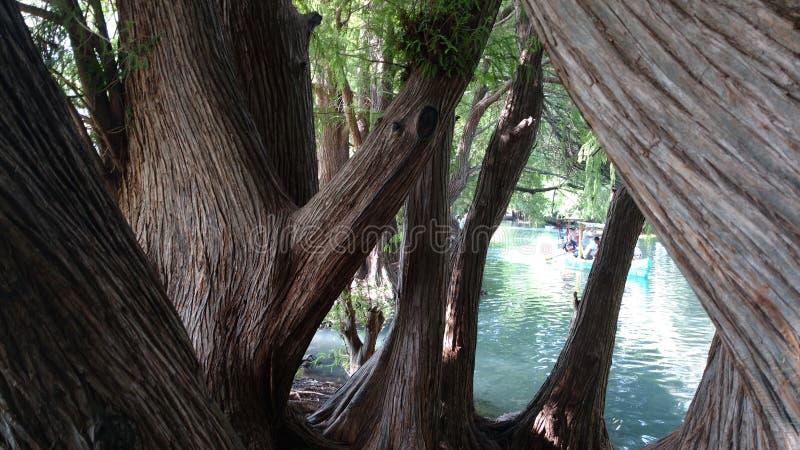 Lago Camecuaro foto de archivo libre de regalías