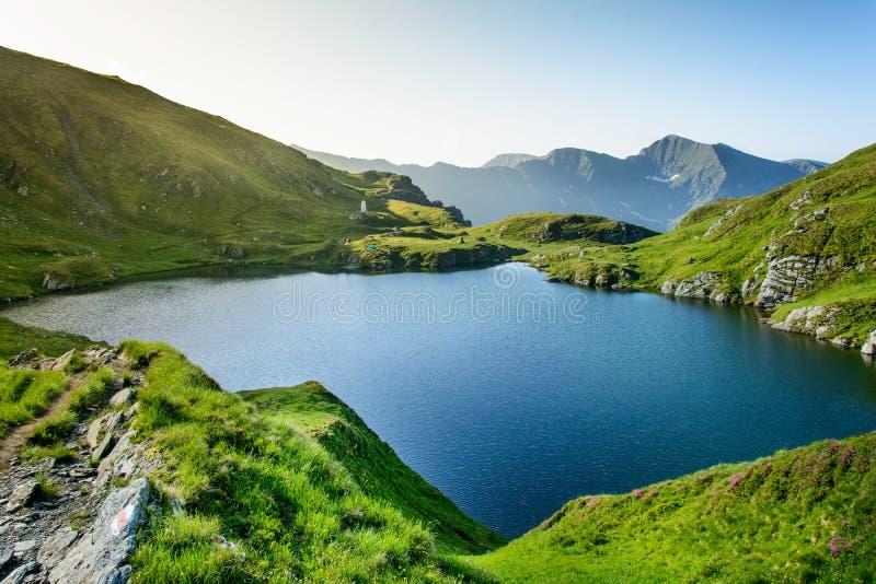 Lago capra das montanhas de Fagaras, perto do lago Balea e do Transfagarasan foto de stock royalty free