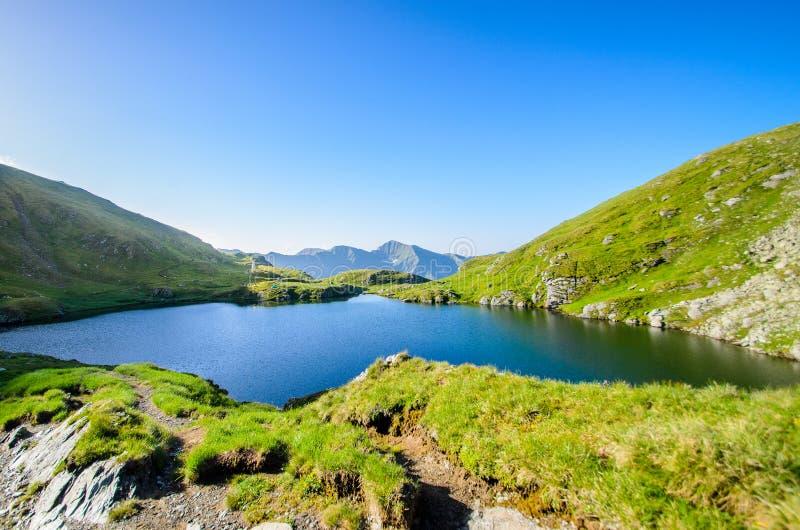 Lago capra das montanhas de Fagaras, perto do pico de Moldoveanu, condado de Arges, a Transilvânia, Romênia fotos de stock royalty free