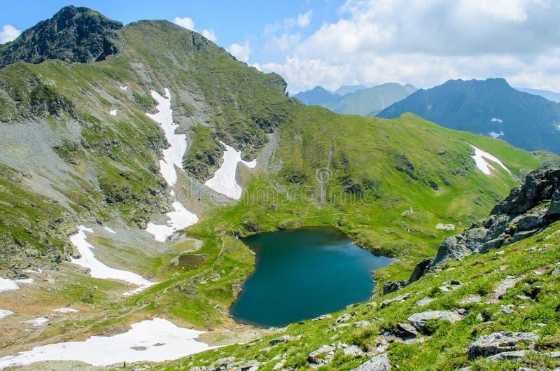 Lago capra das montanhas de Fagaras, perto do pico de Moldoveanu, condado de Arges, a Transilvânia, Romênia fotos de stock