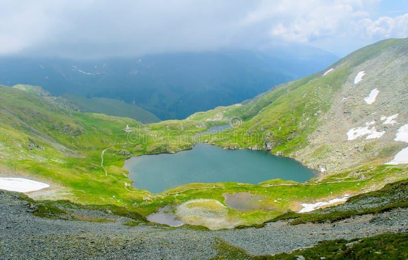 Lago capra das montanhas de Fagaras, perto do pico de Moldoveanu, condado de Arges, a Transilvânia, Romênia imagem de stock royalty free