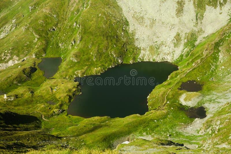 Lago capra em Fagaras imagens de stock
