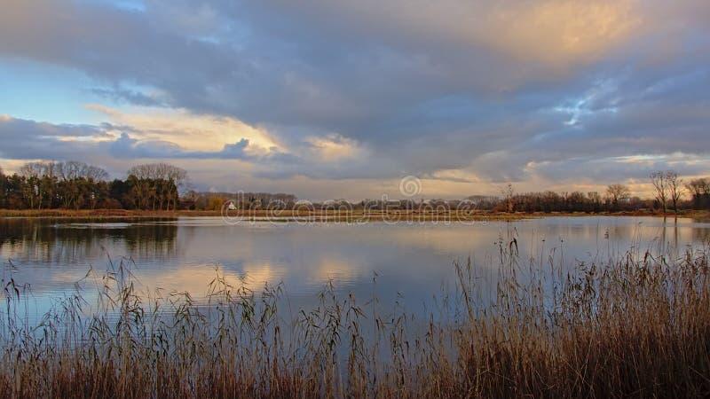 Lago cercado com junco e árvores atrás em uma luz nebulosa da noite fotos de stock royalty free