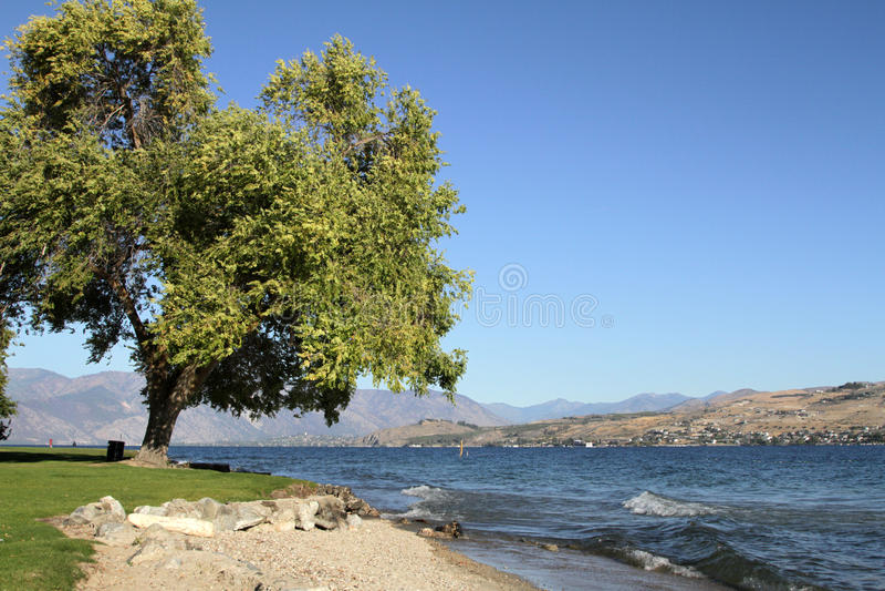Lago Chelan y árbol imagen de archivo libre de regalías