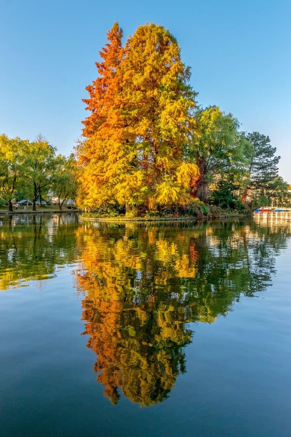 Lago Chios no Central Park de Cluj-Napoca em um dia ensolarado do outono bonito em Romênia fotografia de stock