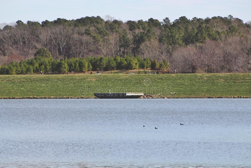 Lago circondato dagli alberi e dalla pianta fotografie stock libere da diritti