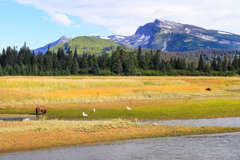 Lago Clark Alaska Brown Bears mountain de la cuesta foto de archivo libre de regalías