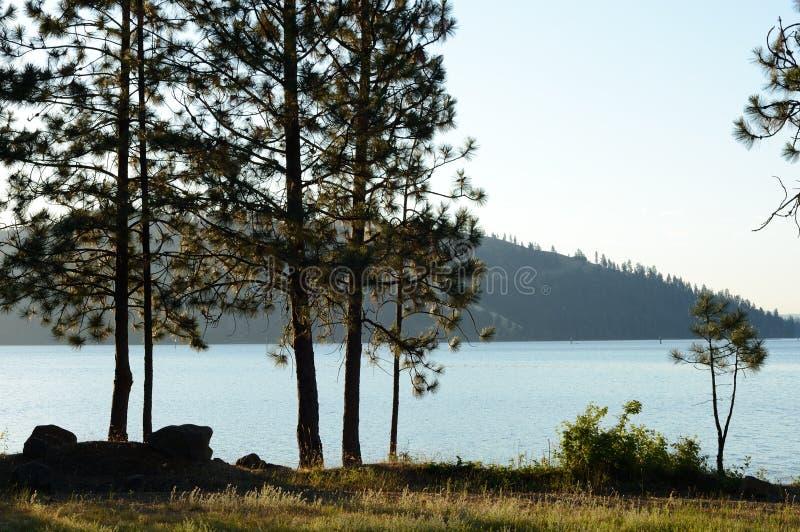 Lago Coeur d 'Alene con los pinos ponderosa fotografía de archivo