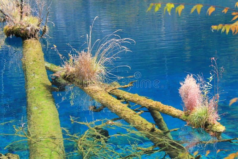 Lago colorido em Jiuzhaigou imagens de stock