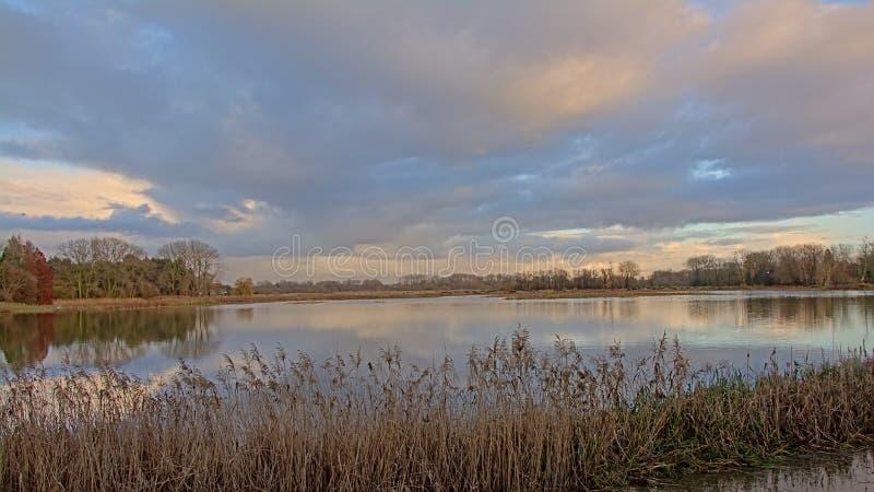 Lago com o junco na parte dianteira e árvores atrás em uma luz nebulosa da noite do dia fotografia de stock royalty free